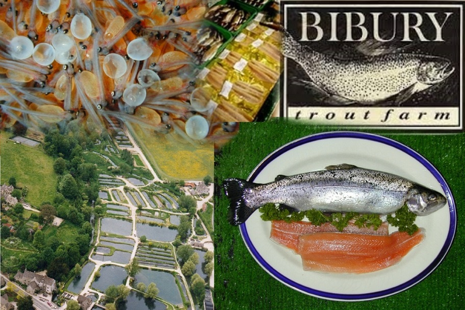 Bibury Collage