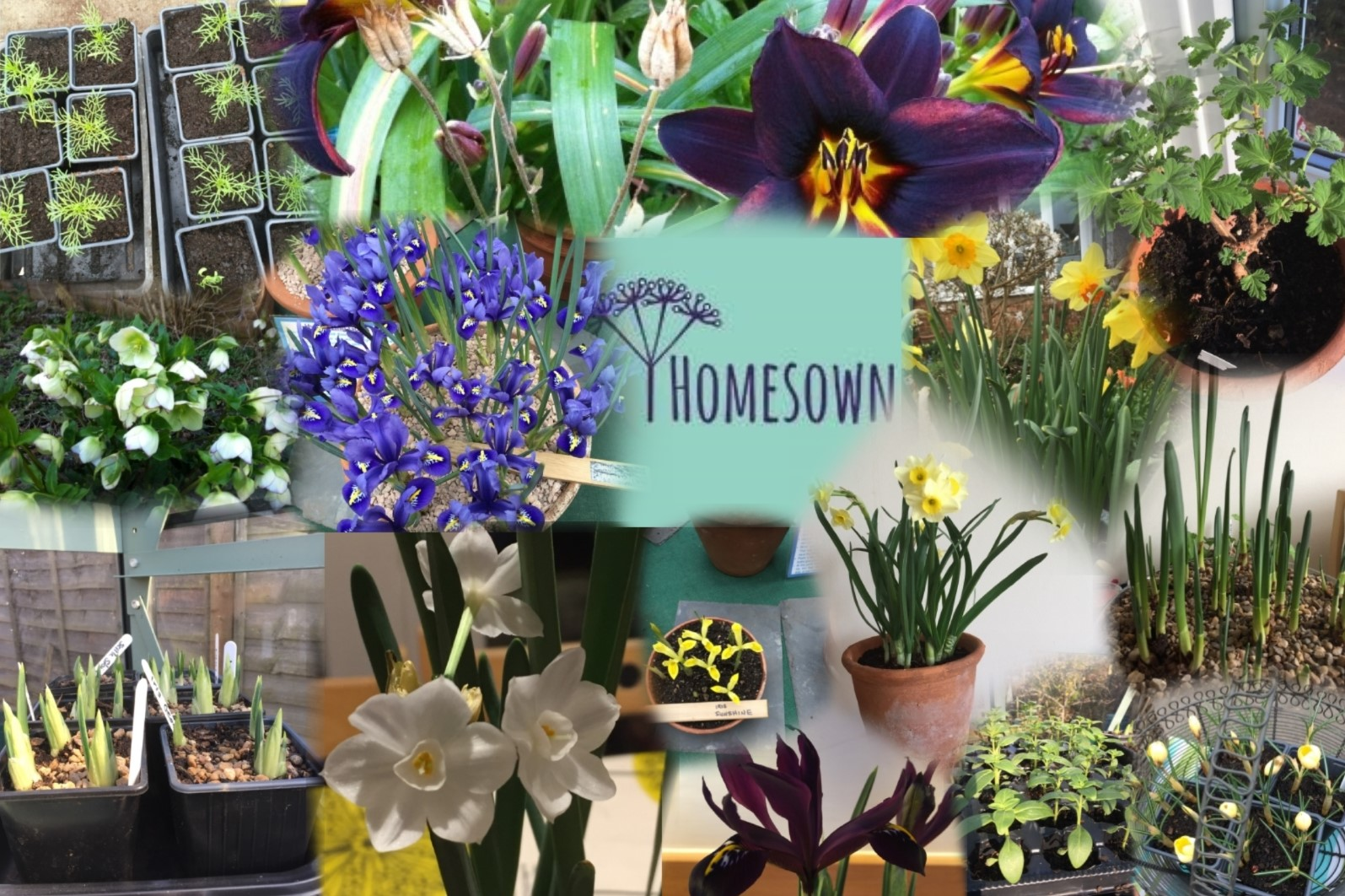 Homesown Collage